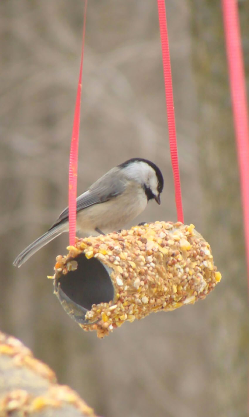 This easy temporary option is perfect to bring some birds to your garden.