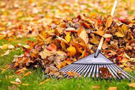 Avoid Aching While Raking: Top Tips for Quick Fall Cleanups