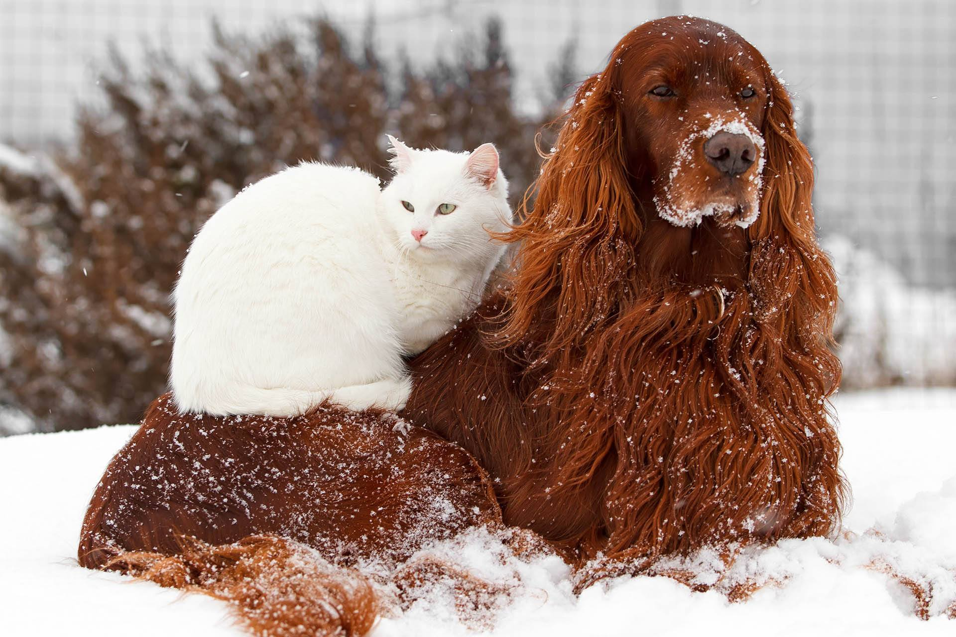 3 Easy Ways to Keep Your Pets Safe this Winter