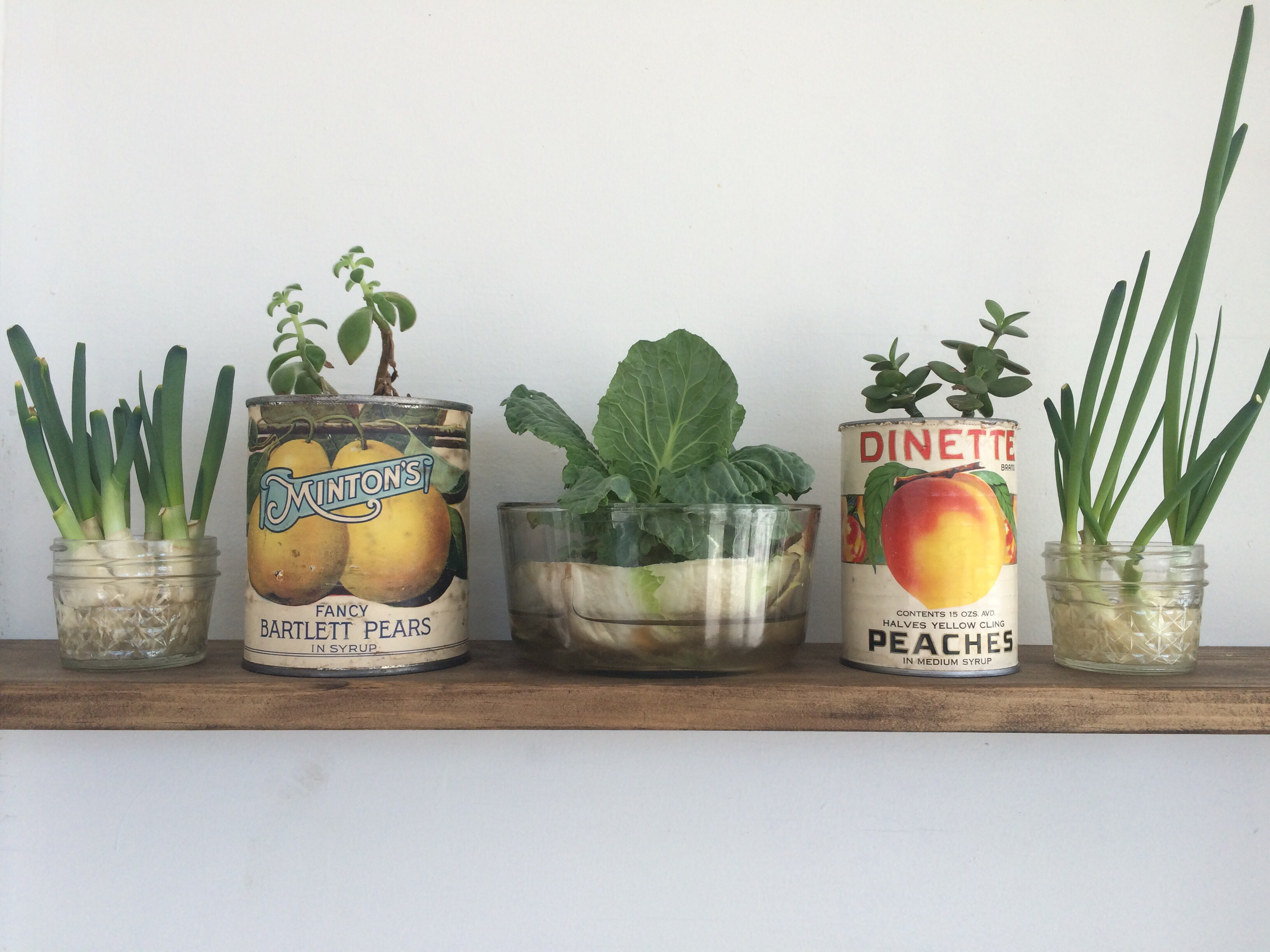 How to Regrow Your Own Vegetables Without Soil