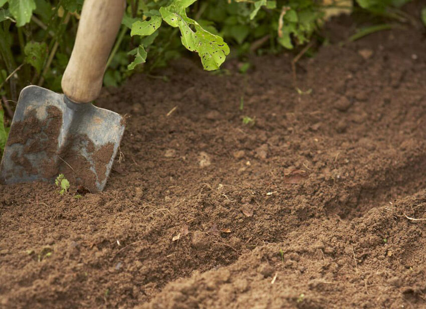 Picking the right location and soil for your veggie garden is important.