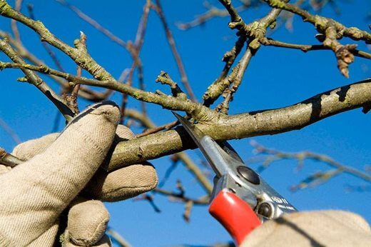 Fall is the perfect time to trim those trees and shrubs
