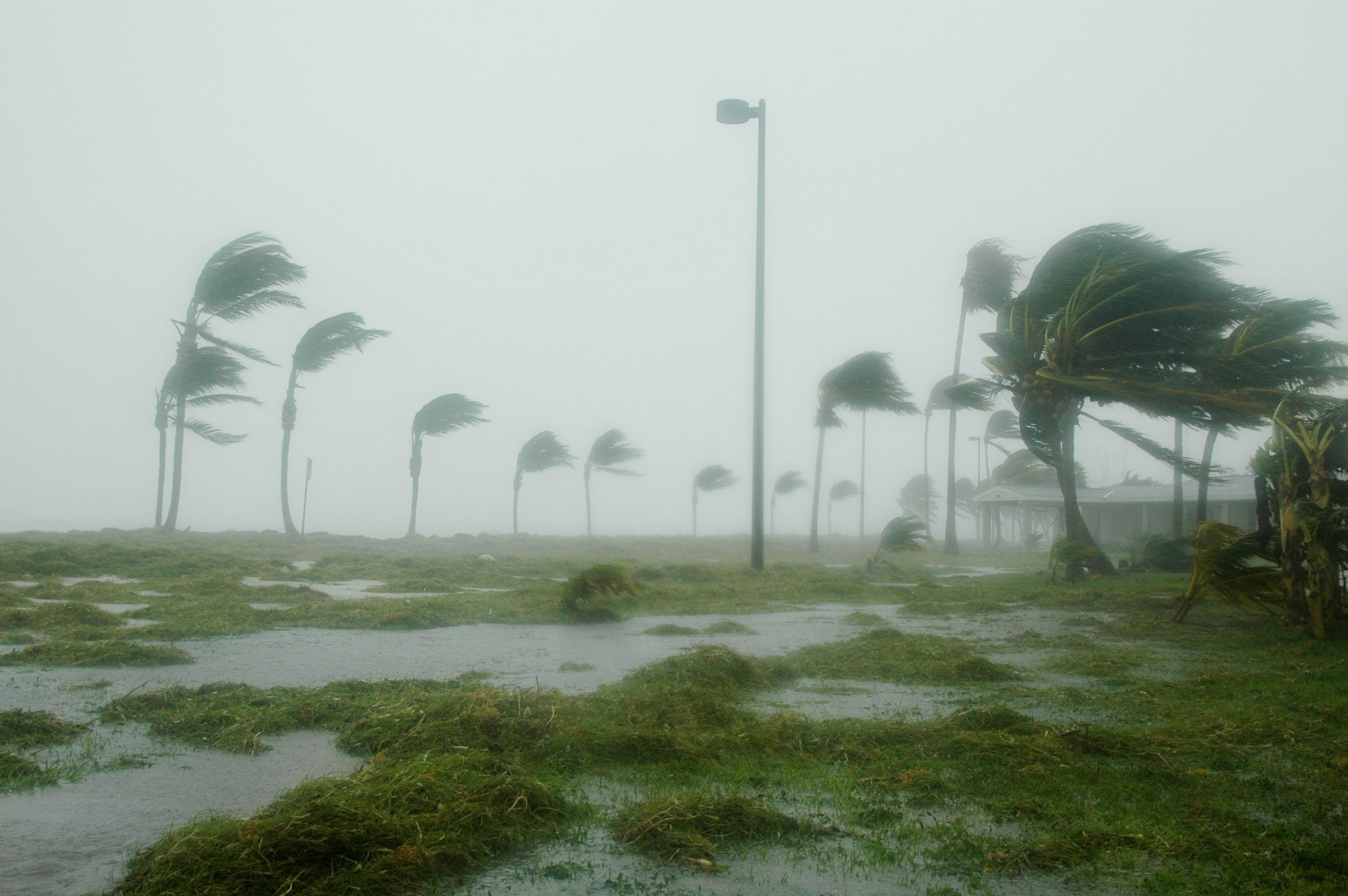 Prepare for an oncoming hurricane with this article