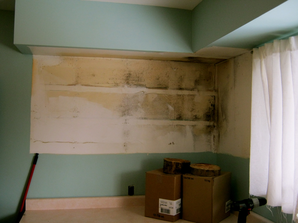 Clear the Air: Mold Removal and Prevention Tips