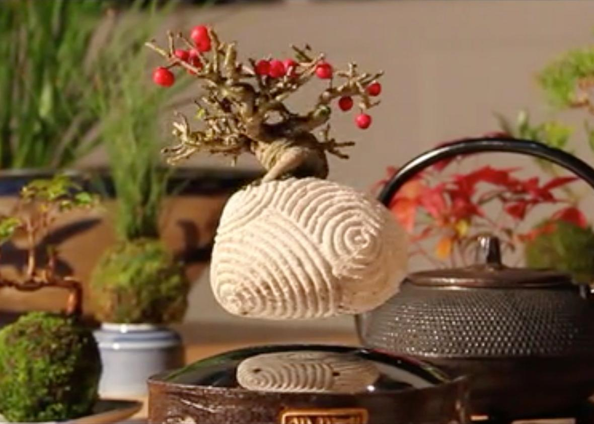This amazing floating bonsai gives a surreal touch to any decor