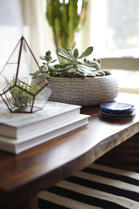 succulents are a great alternative to flowers for your coffee table styling