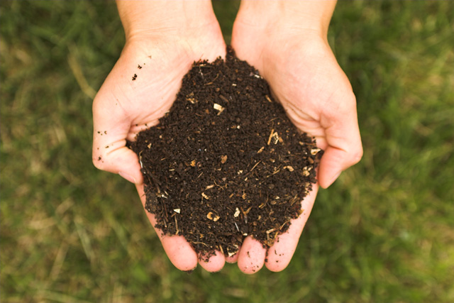 From Trash to Garden Gold: What You Need to Know About Composting