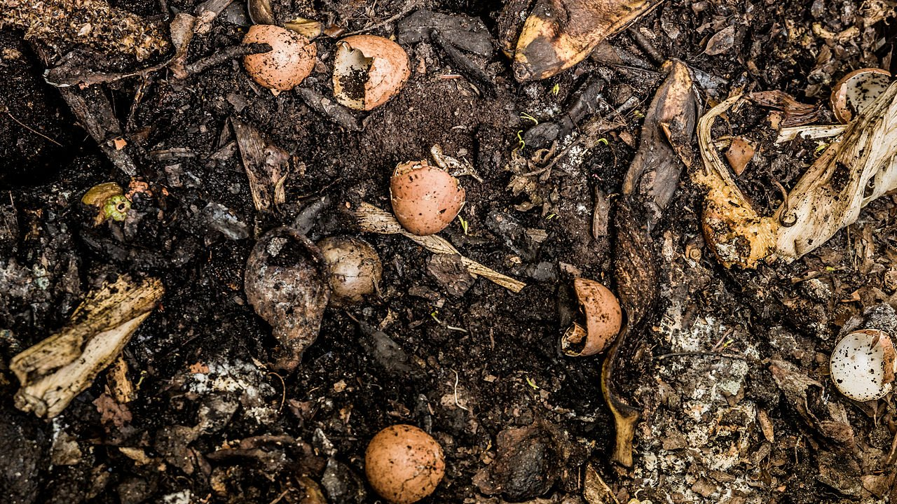 How Do Plants Get Food From The Soil
