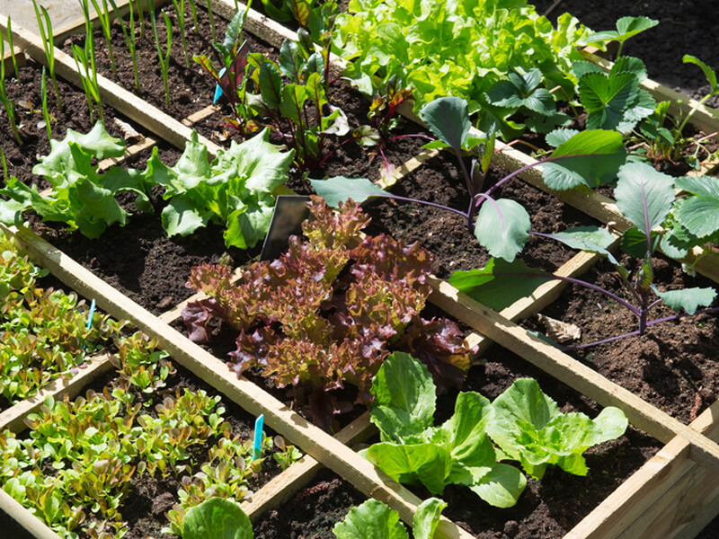 The Beginner's Guide to Growing Your Own Vegetables