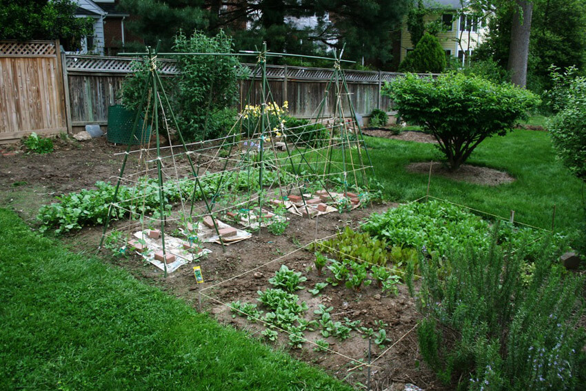 Start with a small veggie garden if you've never had one before.