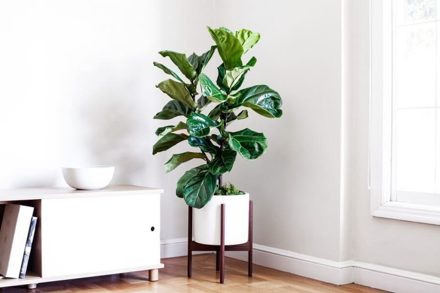 Top 10 Indoor Trees to Place Inside Your House