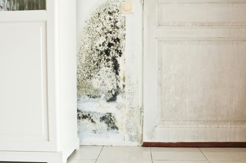 Don't let mold spread into your entire home. Source: US News Loans