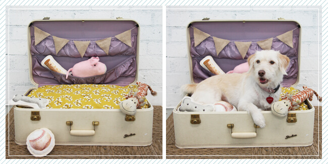 Pack up your doggone suitcase