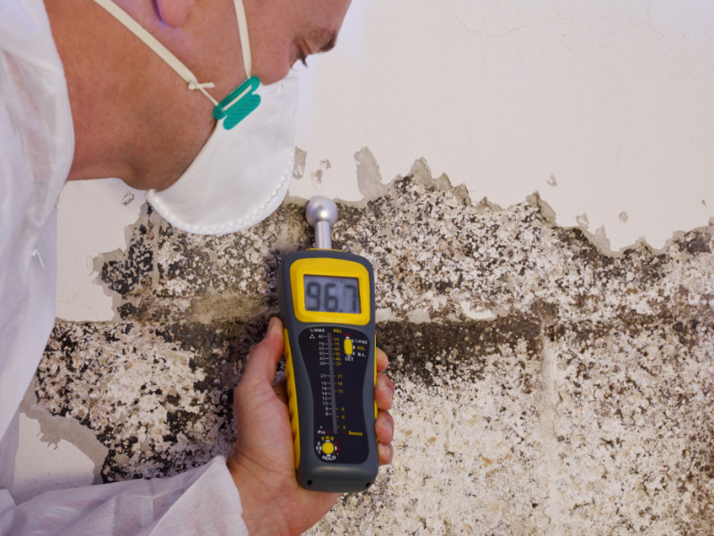 How Much Does Professional Mold Removal Cost?