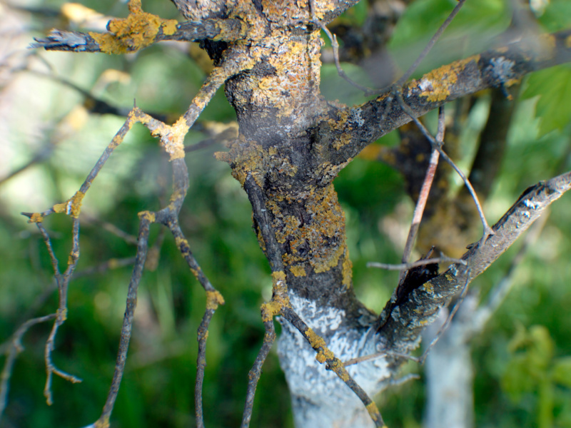 Top 5 Signs Your Tree is Dying