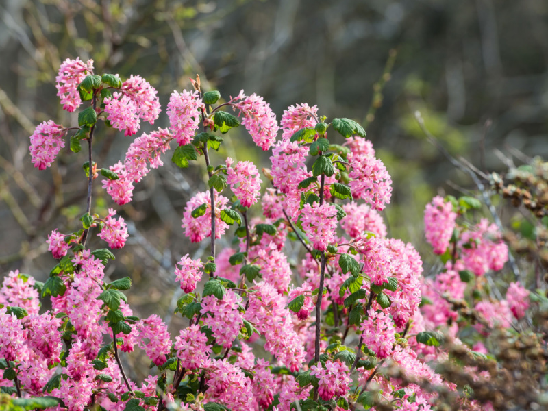 Top 5 Native Plants for Beginning Gardeners