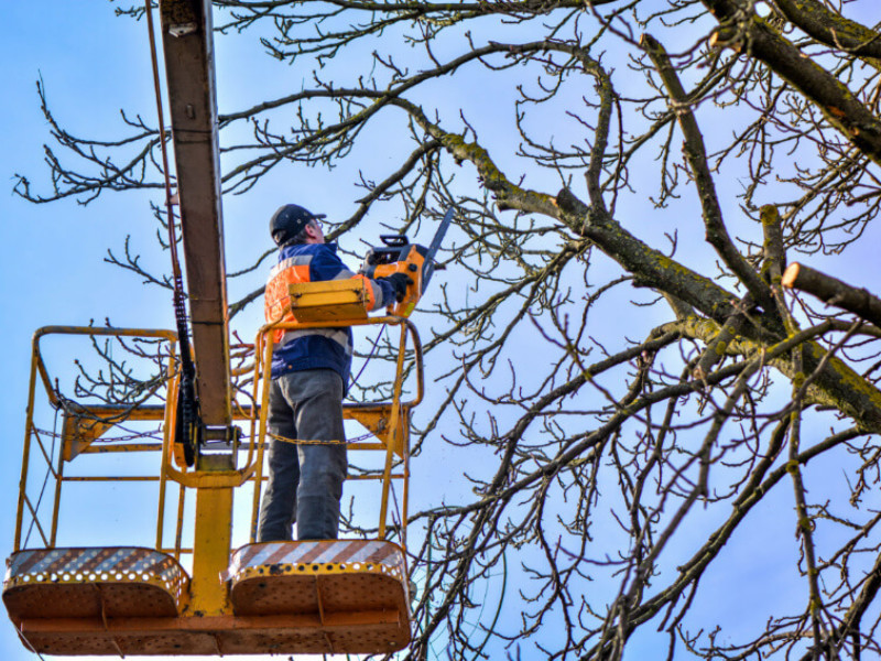 What is the Cost of Tree Removal?