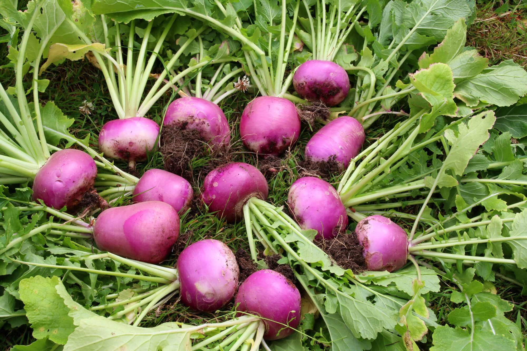 And turnips work too