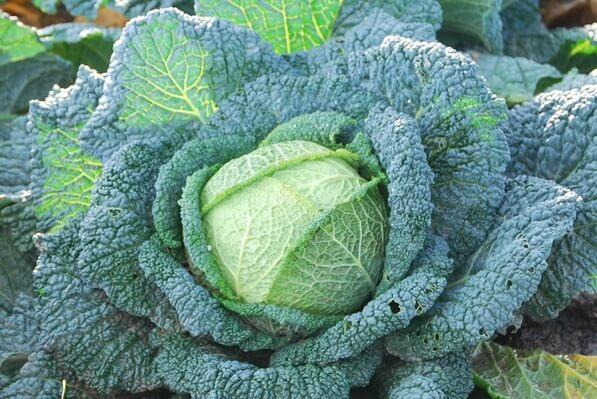 Here's what to plant for a fall harvest in the summer